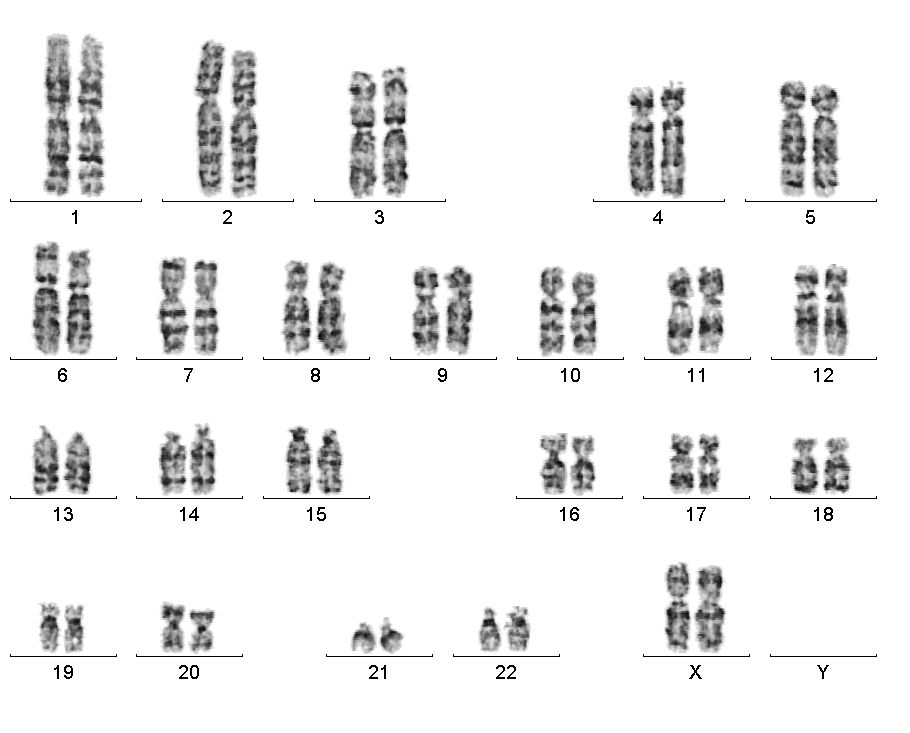 Citogenetika